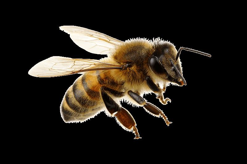 Biene-Bienenfutter-Kellmann